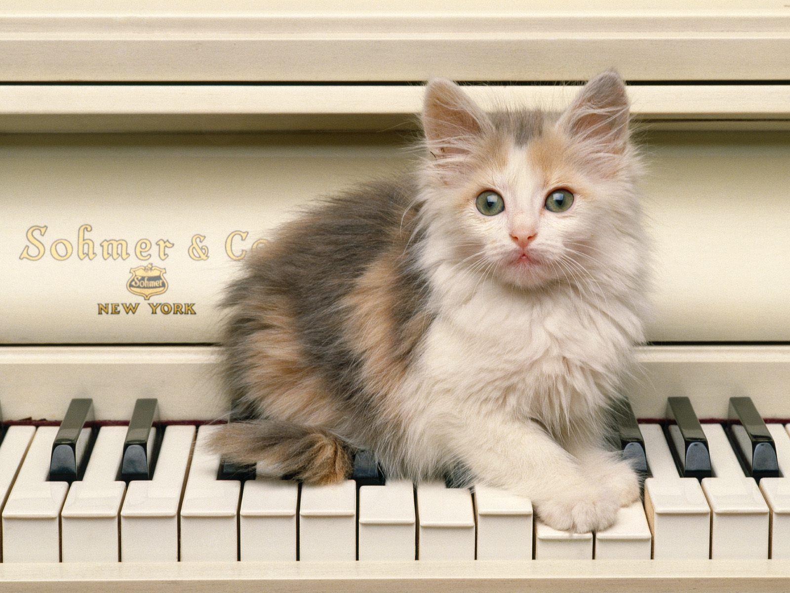Voici des image de chats - Cute kittens hd images ...